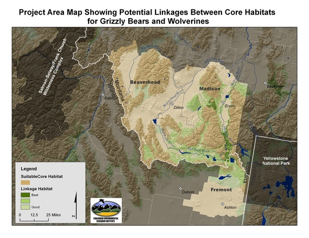 Map: linkages between core habitats for grizzly bears and wolverines